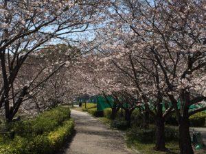 桜情報H31.4.4